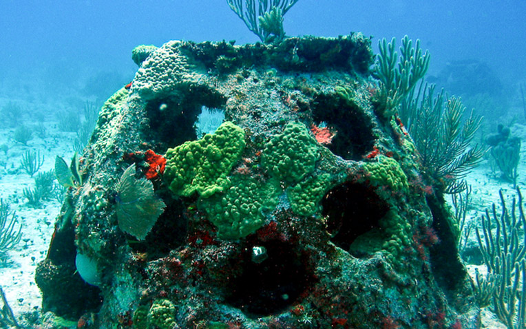 Coral Reefs Constructed with Ashes