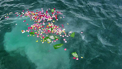 Flower Petals at Sea Scatter