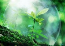 Water Cremation: Is Resomation a Green & Bio Friendly Solution?