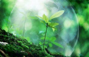 Earth's Ecological Balance
