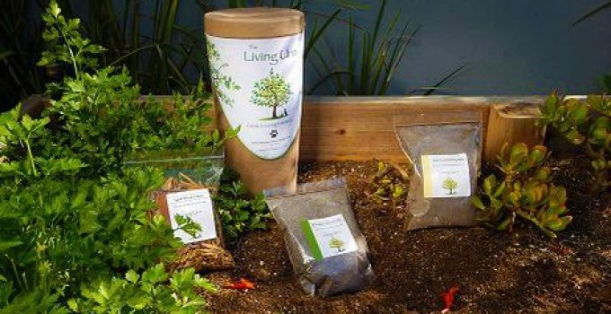 Tree Urns Review: The Best 4 Bio Urns On The Market Today