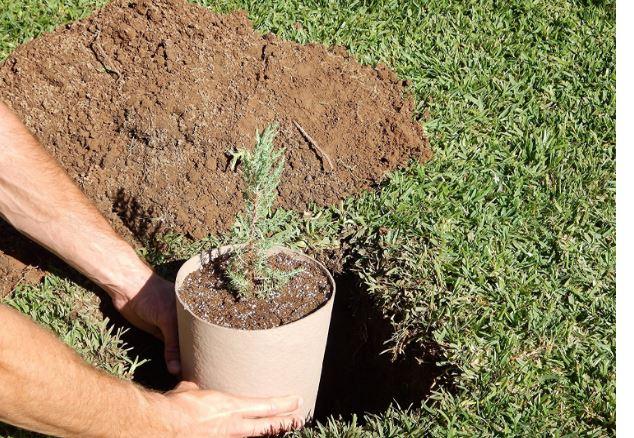 Planting Urn