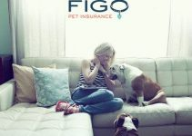 Figo Pet Insurance Review 2021: The Best Coverage For Pets?